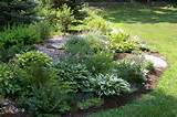 hosta and ferns were left on the low shady side of the berm