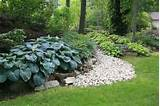 hosta border shade garden