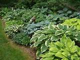 hostas go beyond the eye roll city garden ideas
