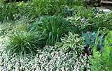 ideas landscape design pictures my front yard perennial garden in