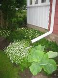perennials hostas galore garden designs decorating ideas hgtv