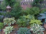 updated hosta garden 2009 garden designs decorating ideas hgtv