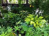 hosta, perennial, shade, cool climate, zone 3, serene, park, garden ...