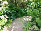shade garden for some shady ideas enjoy hostas ferns astilbes and