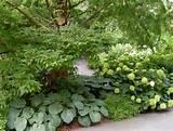shade.garden.hosta.hydrangeas
