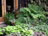garden shade shady garden