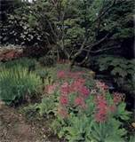Gardening, flower and plant information for creating a shade garden .