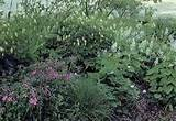 ... garden! Articles. The Shaded Garden Shade Plants per Zone