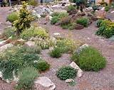 Beautiful Rock Garden Plants Design Ideas | Home Design Gallery