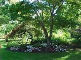Free Shade Trees For Your Home