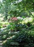 shade garden designs allow the homeowner to create a forest edge
