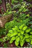 woodland garden design look are a great solution for shade gardens