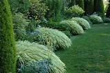 ornamental grasses for shade home garden ideas
