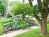 Shawna's Full Shade Veggie Garden