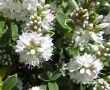 summer garden flowers dorset 15