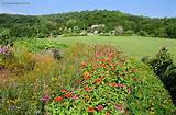 summer flower garden cosmos zinnia marigold
