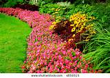 blooming flowers in late summer garden flowerbeds stock photo