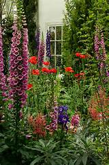 of darwin s garden re created typical english cottage garden flowers