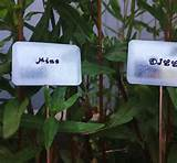 customizable herb signs 10 unique garden markers personalized plant