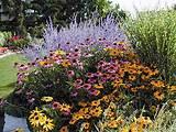 perennial photos perennial pictures flower plant garden pictures