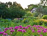 flower garden lb0607 4286 jpg