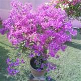 perennial garden plants perennial flower plants perennial nurseries