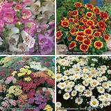 flowers perennials cottage garden perennials complete hardy garden