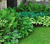 Perennial Shade Garden Plans