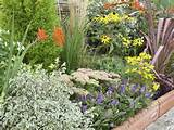 Flowering Garden Shrubs and Perennial Plants