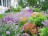 perennial flower gardening perennial plant nursery