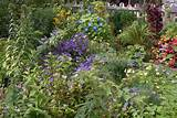 perennial and annual flowers and foliage plants in september garden