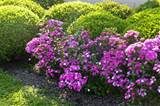 Flowering Shrub – Beautiful Additions to Landscapes and Gardens