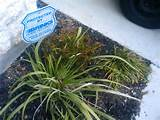 , and do not have much experience in gardening. My plants and shrubs ...