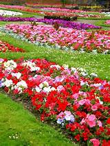 Picture of types of garden flowers