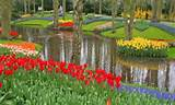 flower garden and pond