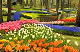 flower garden colorful