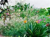 Flower Garden-1