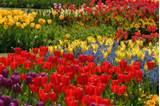 Designs For Garden Flower Beds