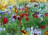 Spring Garden Flowers 300x220 Gardening Tips: Spring Garden Flowers