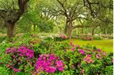 ... flower garden, flower forest cool wallpapers, wonderful flower garden