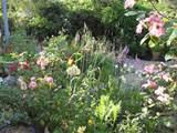 cottage garden by susan cornwell