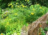 cottage garden typical in cracow region