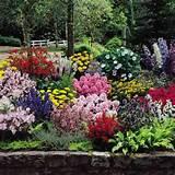complete cottage garden jpg