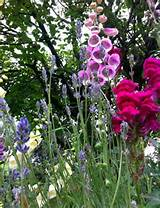 Cottage garden flowers from England