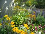 garden flowers and plants perennials