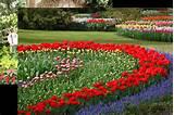 flower garden of 2013