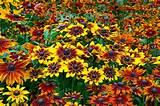 Plants & Flowers - Garden2.