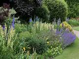 trees plants flowers garden flowers 5701 jpg