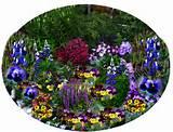 plant-flowers-pull-weeds-flowers.jpg