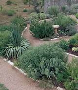 Texas friendly herb garden plan